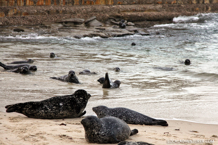 Childrens Pool / Seal Beach La Jolla (25 Free Things to Do in San Diego).