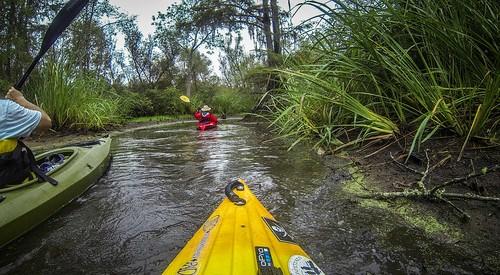 Sparkleberry Swamp with LCU-231