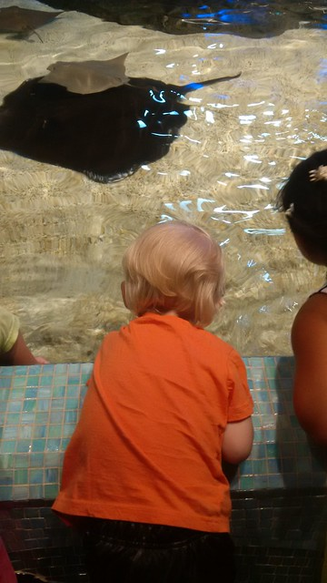 Ray petting zoo
