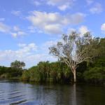 02 Viajefilos en Australia, Kakadu NP 053