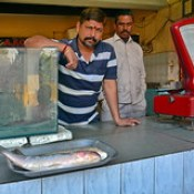 India - Telangana - Hyderabad - Fish Shop.
