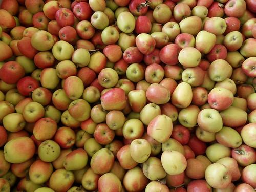 apple-fest-004