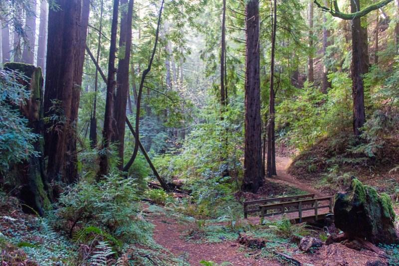 12.19. Purisima Creek Redwoods OSP