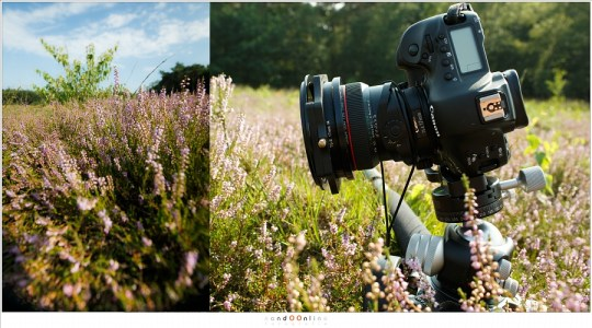 Verticaal formaat met maximale tilt levert een vignet op dat door het croppen naar 4x5 formaat een goed bruikbare foto oplevert.
