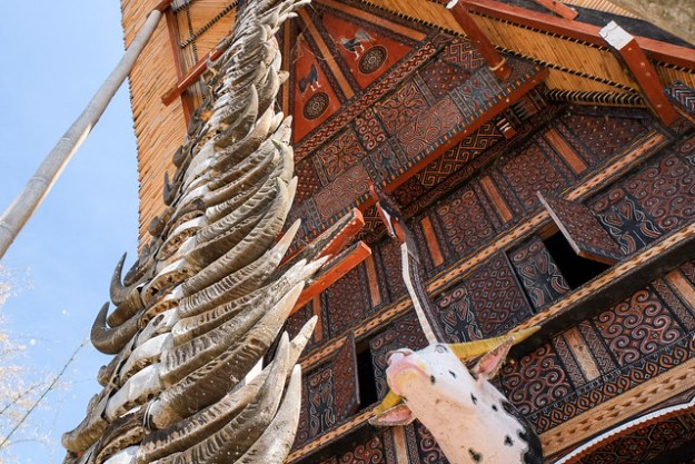 Horns and tongkonan house. Tana Toraja