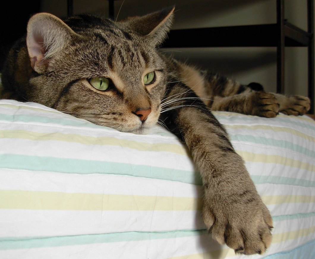 Imagen gratis de un gato tumbado
