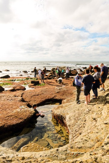 Tide Pooling in San Diego - Discovering amazing sea life at Cabrillo National Monument Tide Pools.