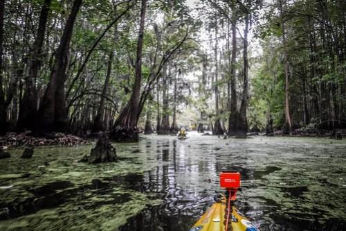 Sparkleberry Swamp with LCU-132