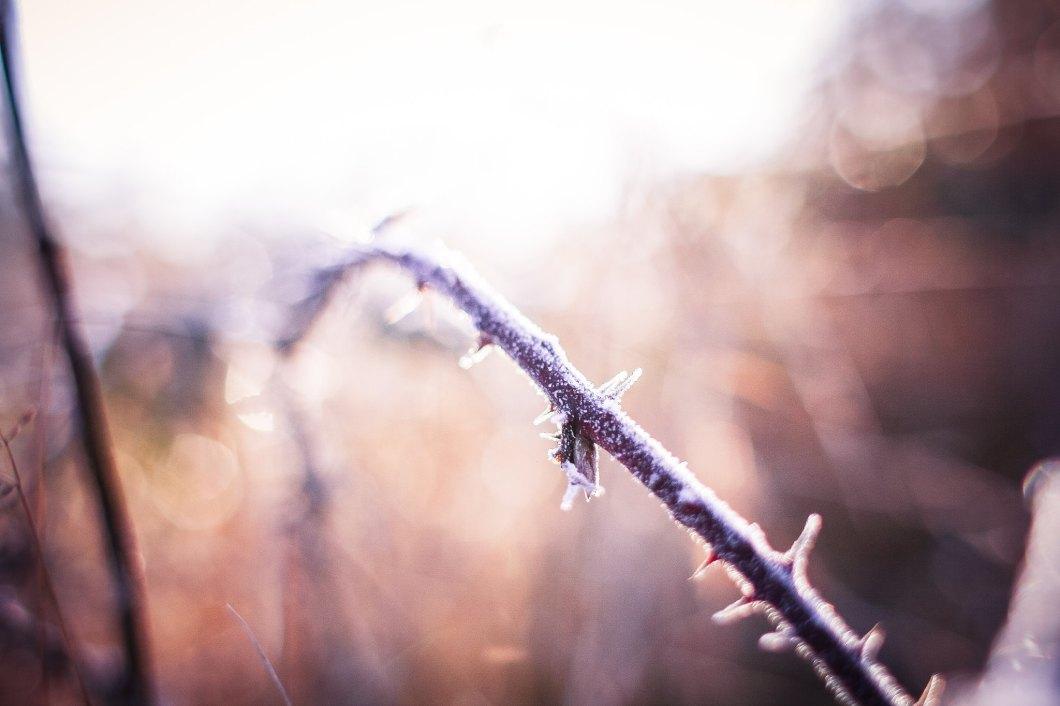 Imagen gratis de una rama helada