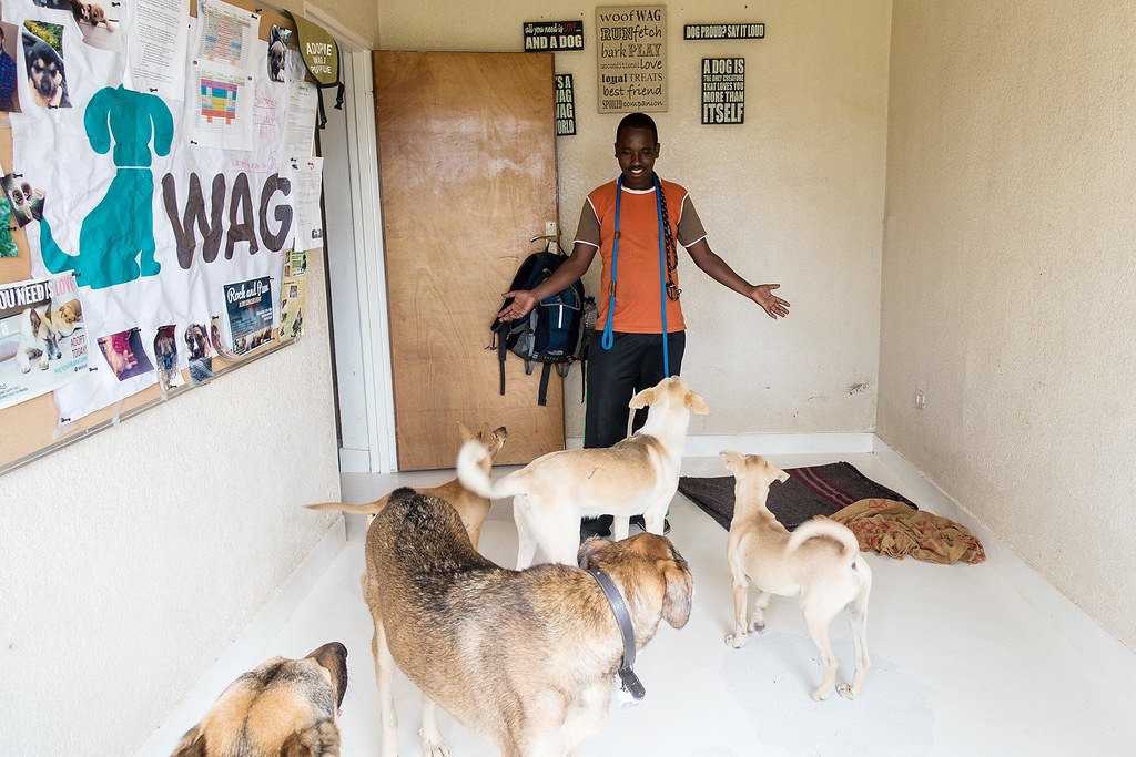WAG care taker and his flock.