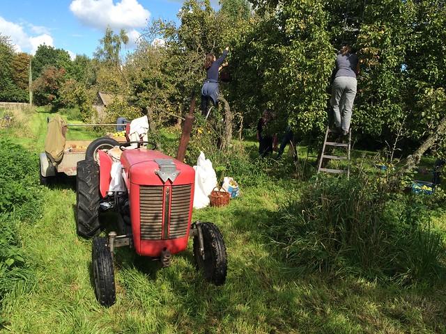 Annual apple harvest at the Kellers'
