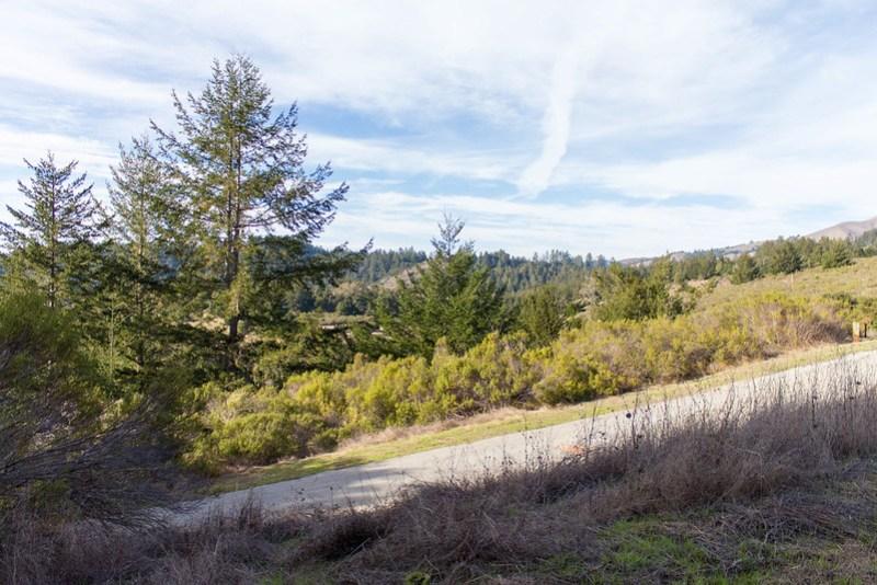 11.22. Pescadero Creek and Portola Redwoods parks