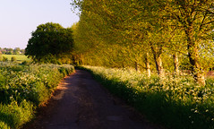Avenue on the Levels