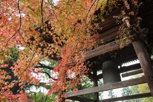 Autumn leaves ( temple big bell )