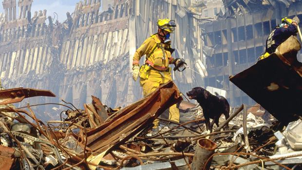 911_searchdog_photo