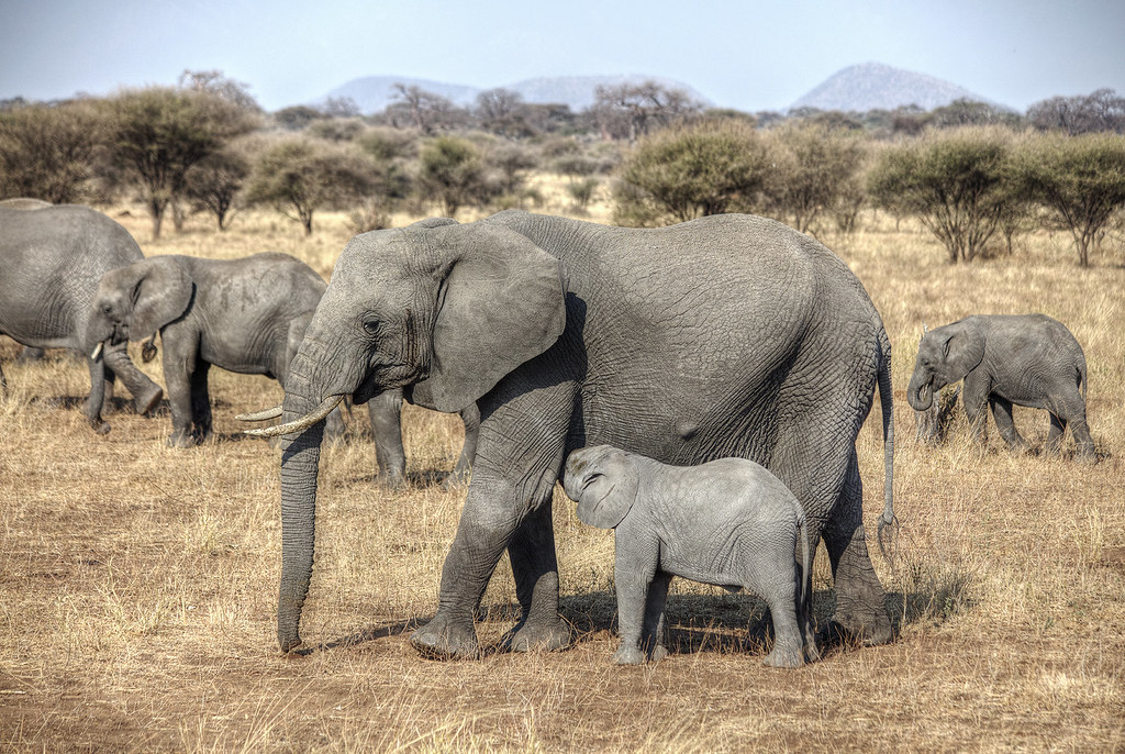 A mother elephant and her calf