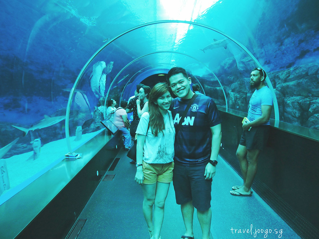 travel.joogo.sg - SEA Aquarium 11