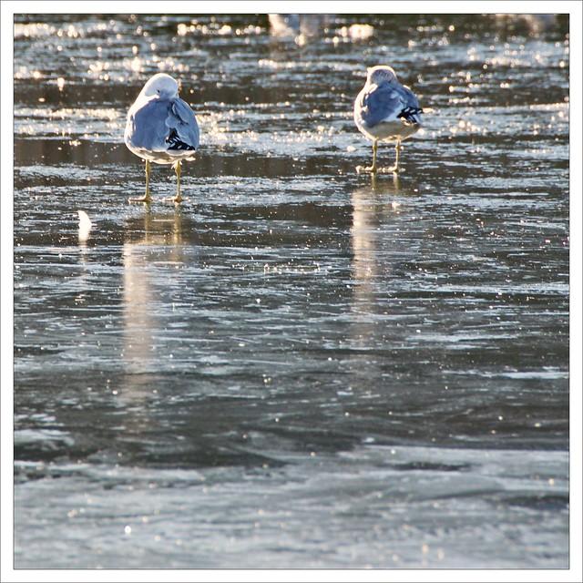 On Frozen Waters