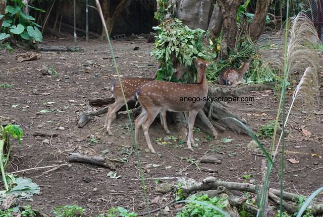 動物園 小鹿ちゃん