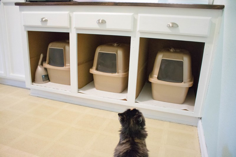 Bella and The Litter Boxes