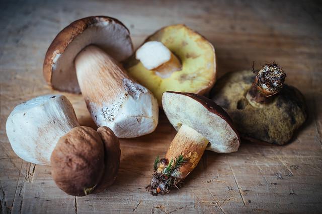 Eekhoorntjesbrood en kastanjeboleet