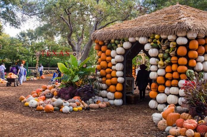 Dallas Arboretum Pumpkin Village