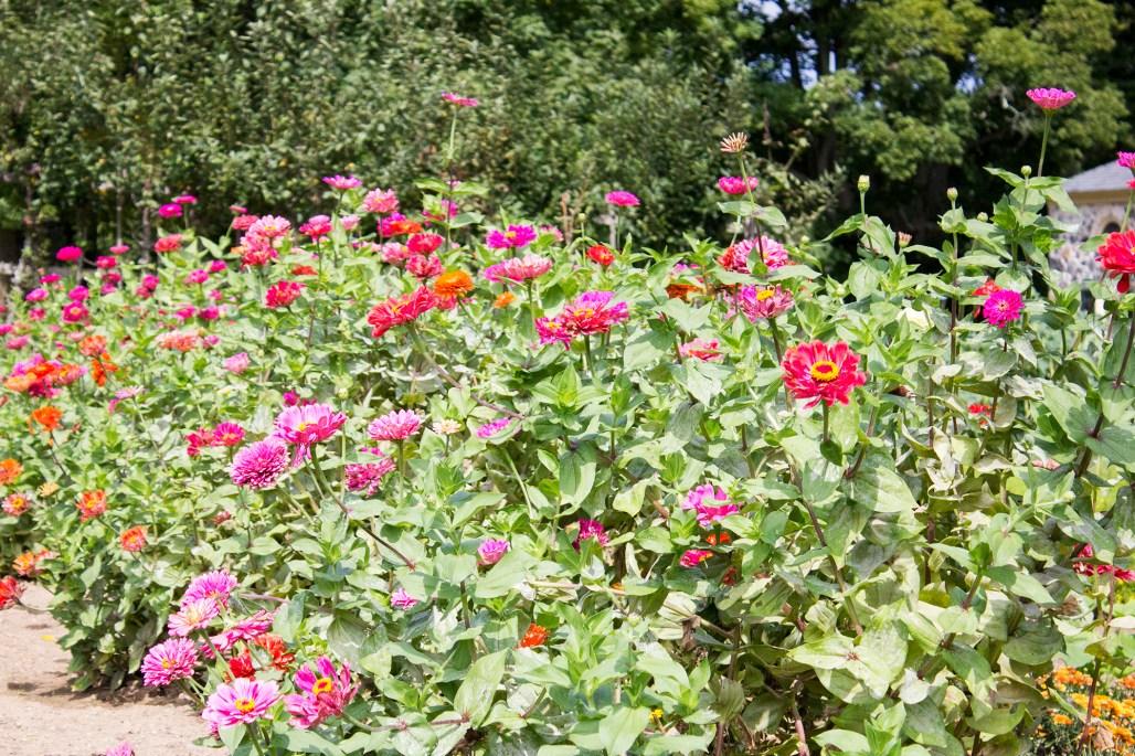 hagley-garden-food-tour-pink-flowers