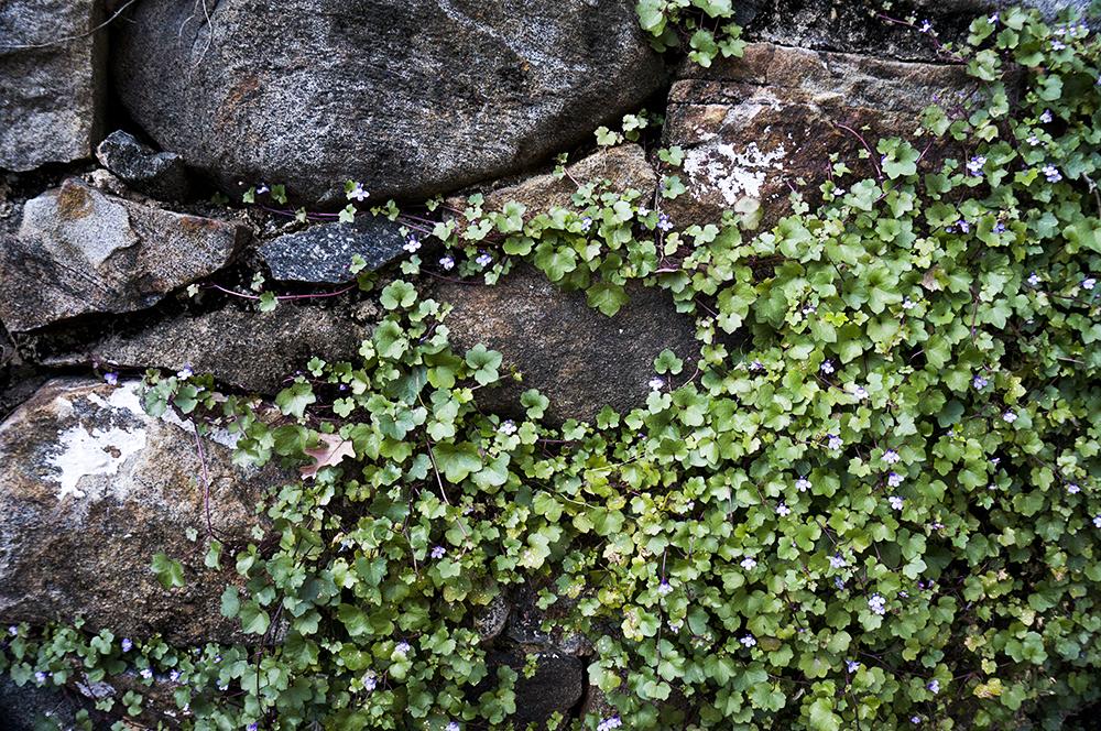 hagley-flowers