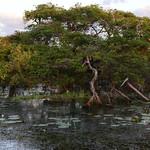 02 Viajefilos en Australia, Kakadu NP 108