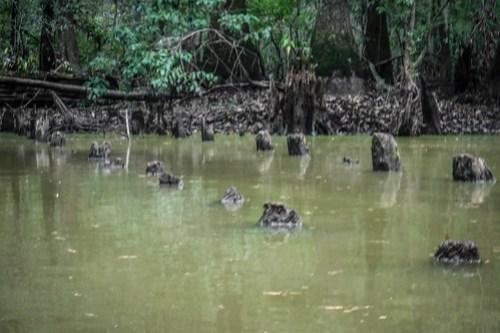 Sparkleberry Swamp with LCU-105