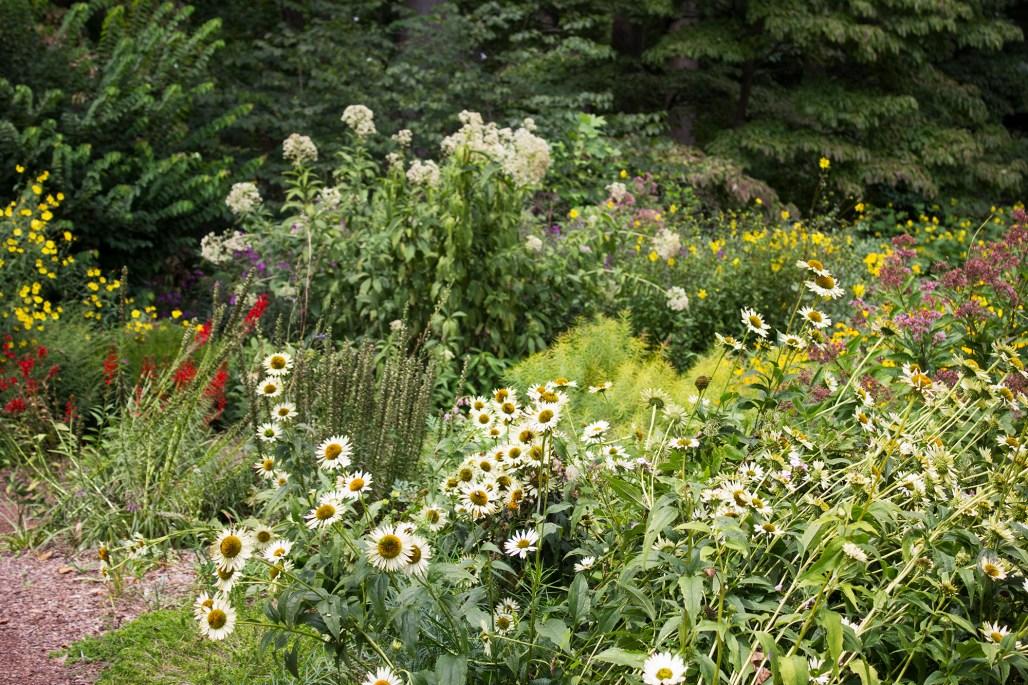 mt-cuba-gardens-delaware-wildflower-path