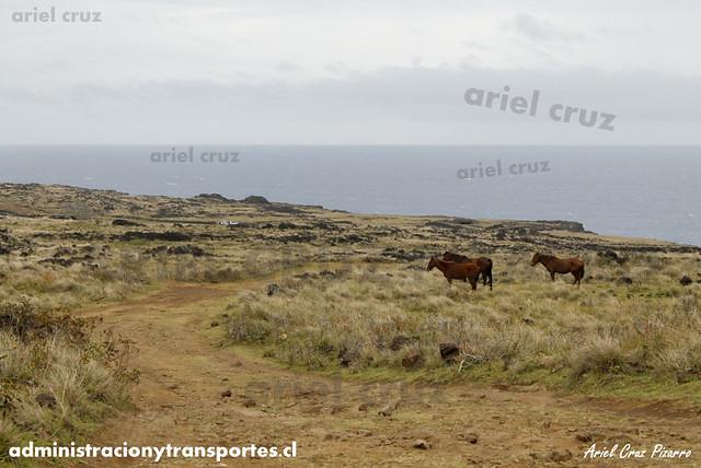 Camino a las Cuevas (Isla de Pascua)