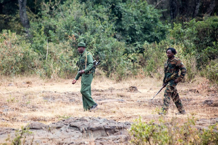 Park Rangers to protect the elephants from poachers and predators.
