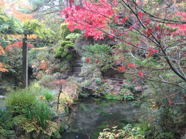 autumn colours in the Kildare Japanese gardens