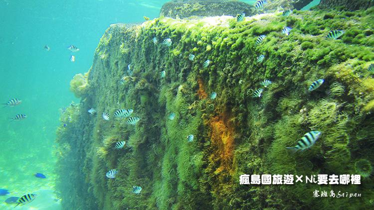 72塞班島坦克車潛水