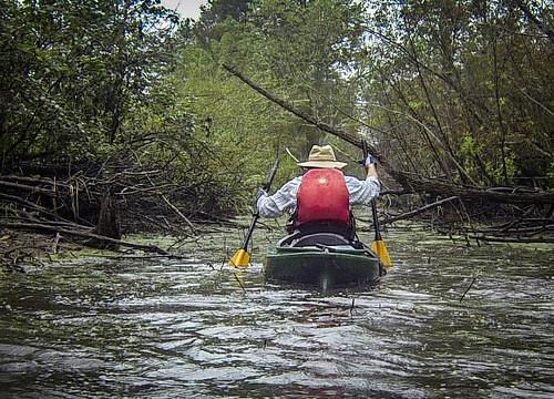 Sparkleberry Swamp with LCU-238