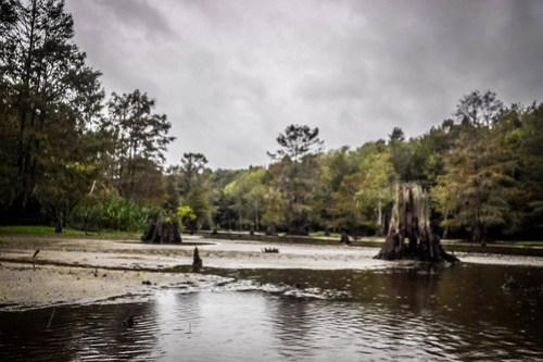 Sparkleberry Swamp with LCU-53