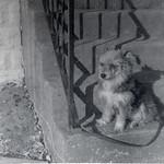 Found Film Kodak Hawkeye Instamatic II
