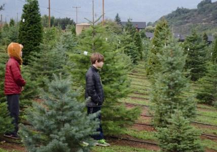 Christmas Tree Farm-5