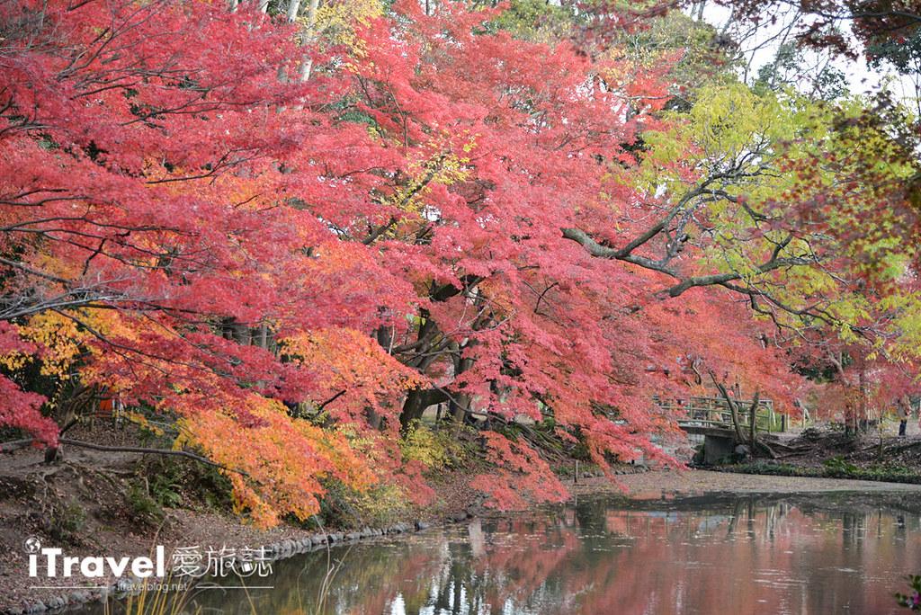 《京都赏枫景点》京都府立植物园秋色美景,适合亲子家庭旅行来访