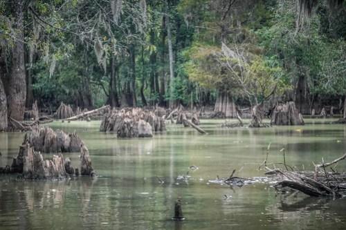 Sparkleberry Swamp with LCU-116