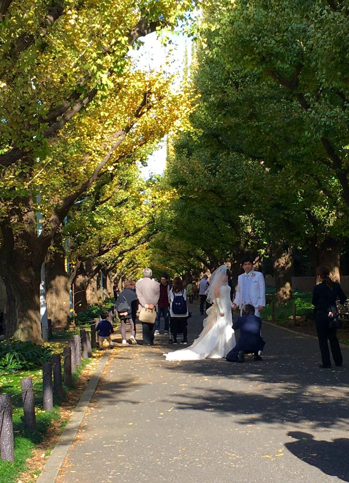 Meiji Jingu Gaien Autumn Colors