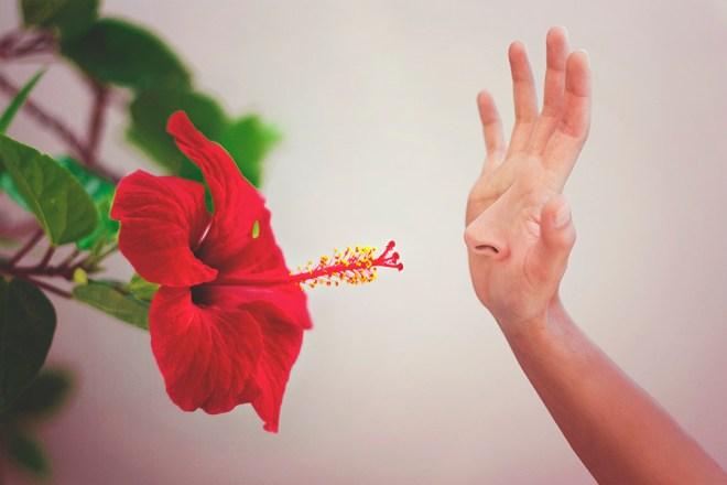 Párate a oler las flores