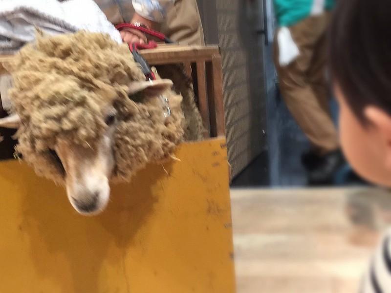 羊と次男、エンカウント