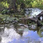 02 Viajefilos en Australia, Kakadu NP 071