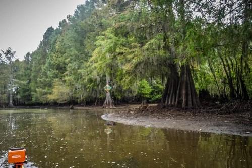 Sparkleberry Swamp with LCU-143