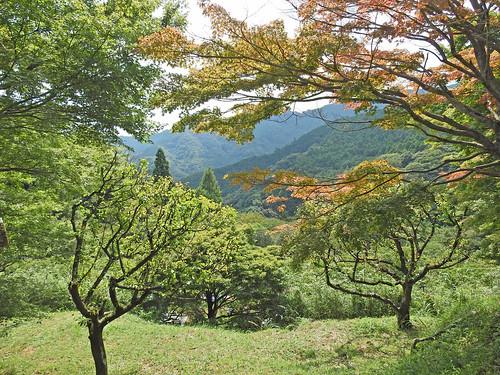 Landscape from Hinata Yakushi, Buddhist Temple, Isehara, Japan