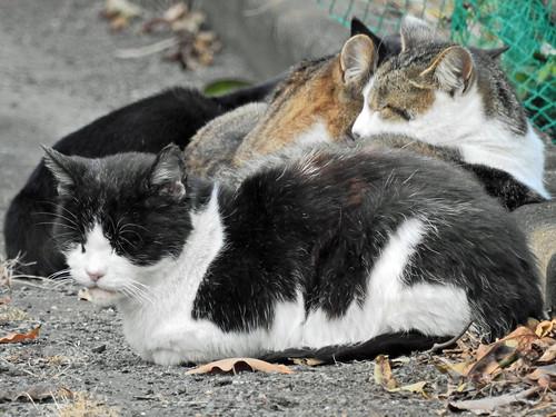 Sleeping cats(Isehara, Japan)