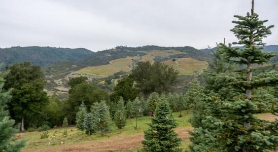 Christmas Tree Farm-8