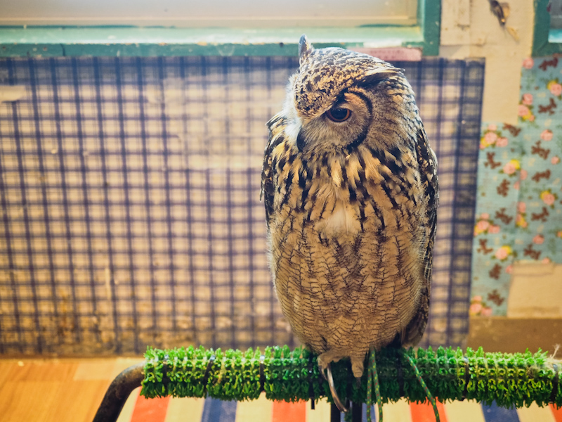 Lucky-Owl-Cafe-Osaka-13